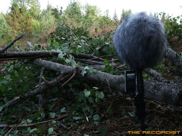 Ultimate Foliage Tree Recording